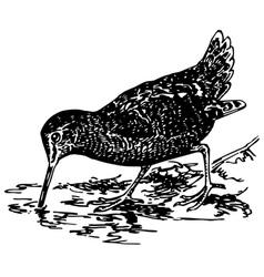 bird eurasian woodcock vector image