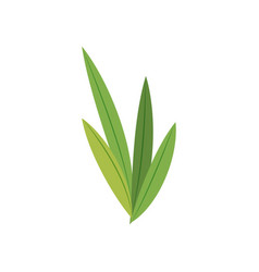 Natural leaves foliage flora green vector