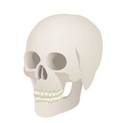 Skeleton of the human skull icon vector