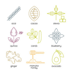Superfood color line icons set vector