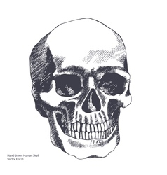 Vintage ethnic hand drawn human skull vector image