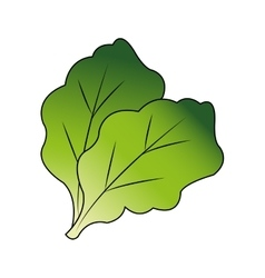 Isolated lettuce design vector