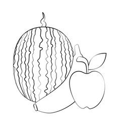 watermelon banana and apple fruits vector image