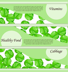 cabbage from the garden vector image