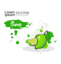 Lime hand drawn watercolor fruit on white vector
