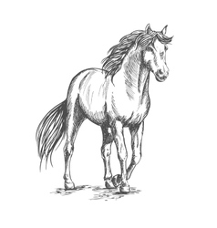 White horse standing with lifted hoof vector