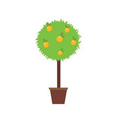 orange tree in a pot vector image