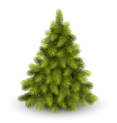 Christmas tree pine isolated on white vector