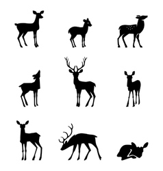 Silhouette deer on white background vector