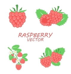Flat raspberry icons set vector