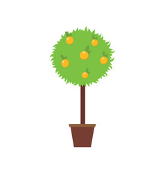 Orange tree in a pot vector