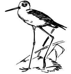 Bird black-winged stilt vector