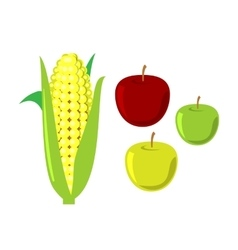 Corn cobs on white background set vector image