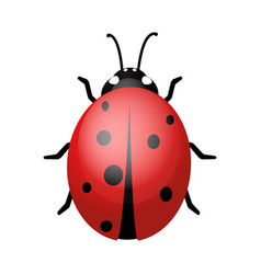 ladybug on a white background design vector image vector image