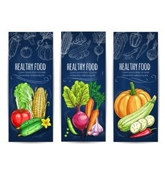 Vegetables sketch Vegetarian vegetable banners vector image
