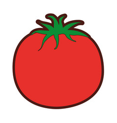 Tomato fresh vegetable icon vector