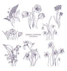 set of gorgeous botanical drawings of spring vector image