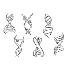 Dna models with double helices sketches vector