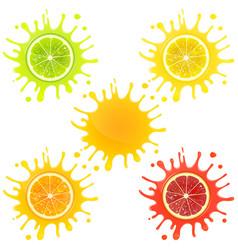 Citrus fruit in splashes of juice vector