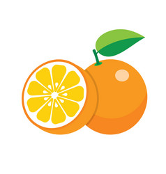 Oranges on white background vector