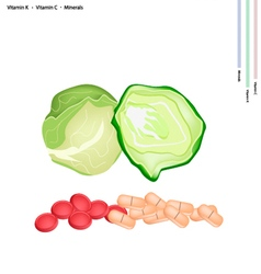 Fresh cabbage with vitamin k and vitamin c vector
