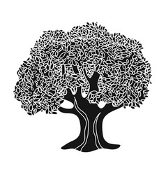 Olive treeolives single icon in black style vector