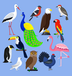 Bird species collection different vector