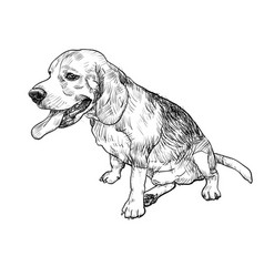 Drawing of adorable male beagle sitting and vector