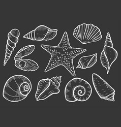 hand drawn seashell vector image