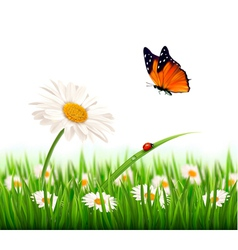 Nature summer daisy flower with butterfly vector image vector image