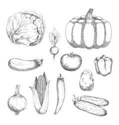 Sketched fresh vegetables for agriculture design vector image vector image