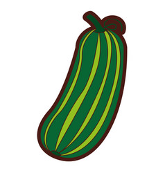 Cucumber fresh vegetable icon vector