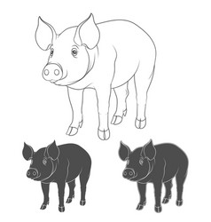 Set of depicting pigs vector