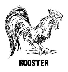 Rooster or cock bird hand drawn sketch vector
