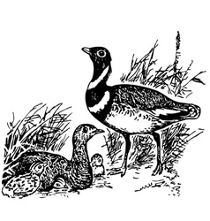 Bird little bustard vector