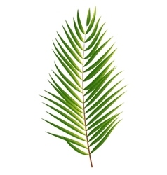 Palm tree leaf silhouette isolated on white vector
