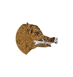 Wild boar razorback bone in mouth drawing vector