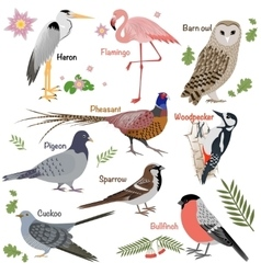 Realistic birds collection vector
