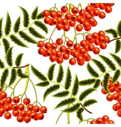 Red rowan berries seamless pattern template for vector