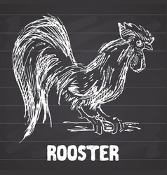 Rooster or cock bird hand drawn sketch on vector