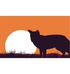 Fox at afternoon scenery silhouettes vector
