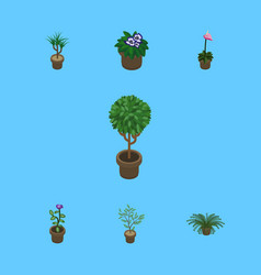 Isometric plant set of flower tree grower and vector