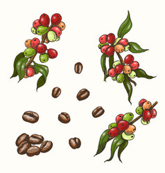 Set of colored coffee vector