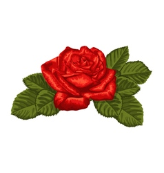 beautiful red rose and leaves isolated on white vector image