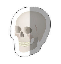 White skeleton of the human skull icon vector