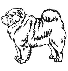 decorative standing portrait of chow chow vector image vector image