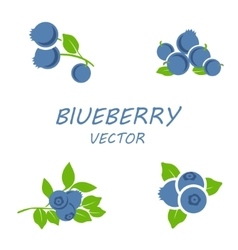 flat blueberry icons set vector image