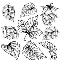 Hops graphic set vector
