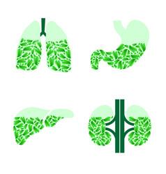 Human organs healthlife vector