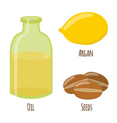 argan fruit oil nuts seeds for herbal cosmetics vector image vector image